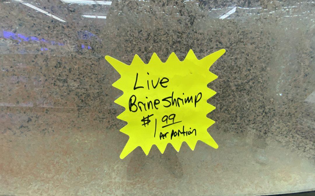 Live Brine